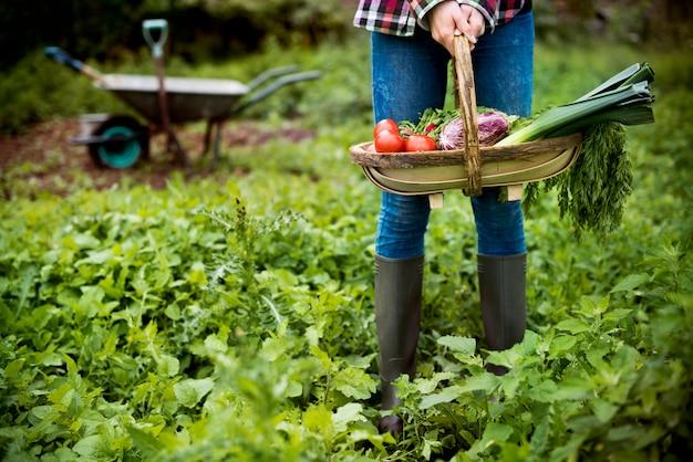 Plantaardige boerderij