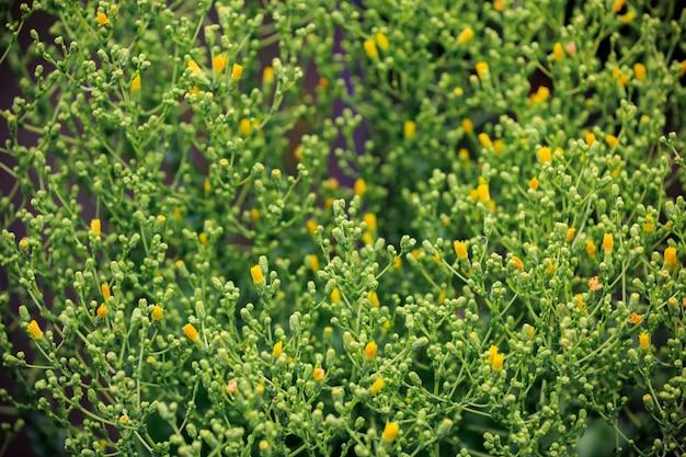 Plantaardige salade bloeit met gele bloemen botanische achtergrond