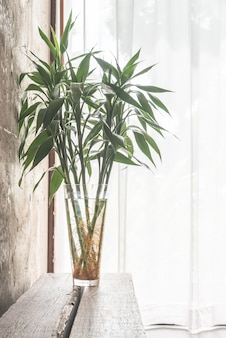 Plantaardige schone vloer lichte, moderne
