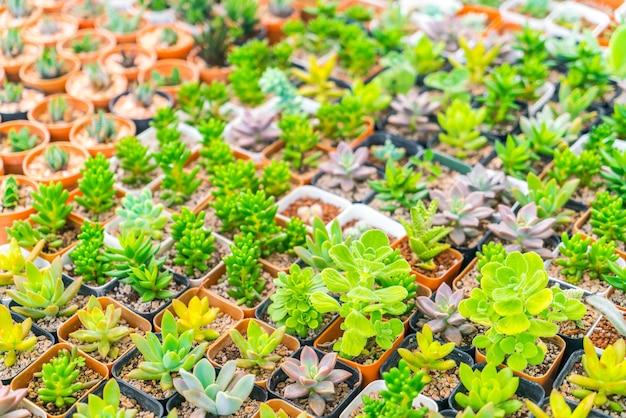 Plantaardige succulent symmetrie doorn droog