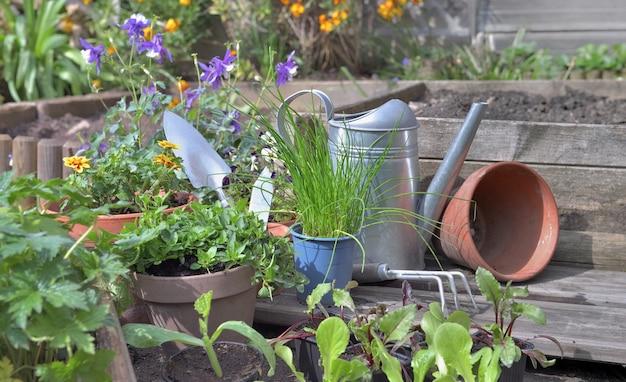 Plantaardige zaailingen en aromatische plant met tuingereedschap in een tuin