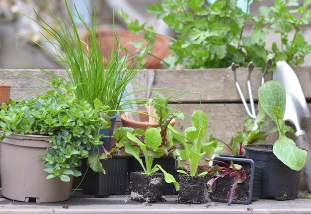 Plantaardige zaailingen en aromatische planten met tuingereedschap op een plank in een tuin