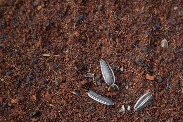 Plantaardige zaailingen worden geplant in potten, biologisch.