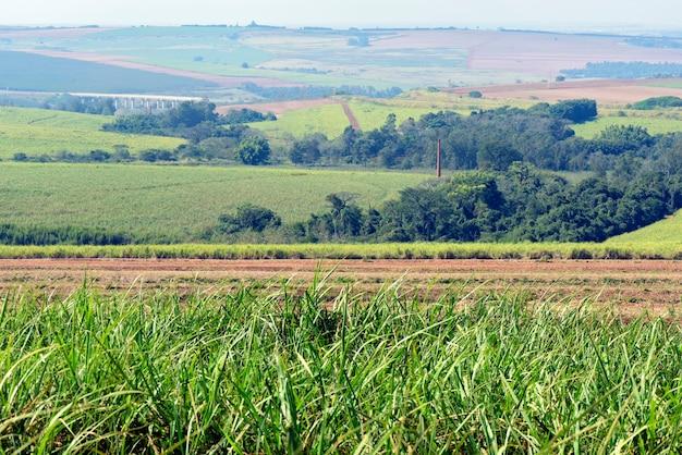 Plantage van suikerriet in brazilië