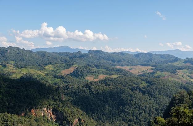 Plantageveld van de lokale boer op de hoge berg nabij het nationale park.