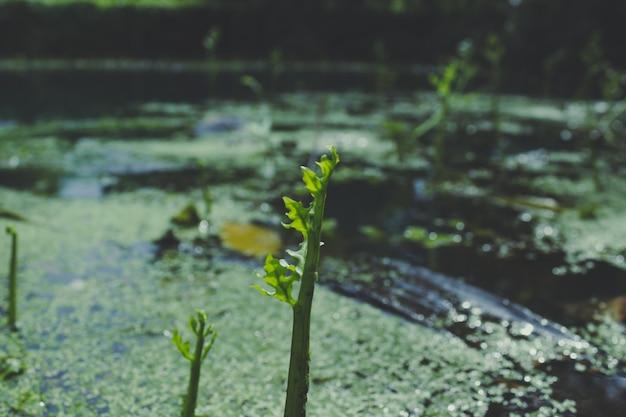Planten die op het water groeien