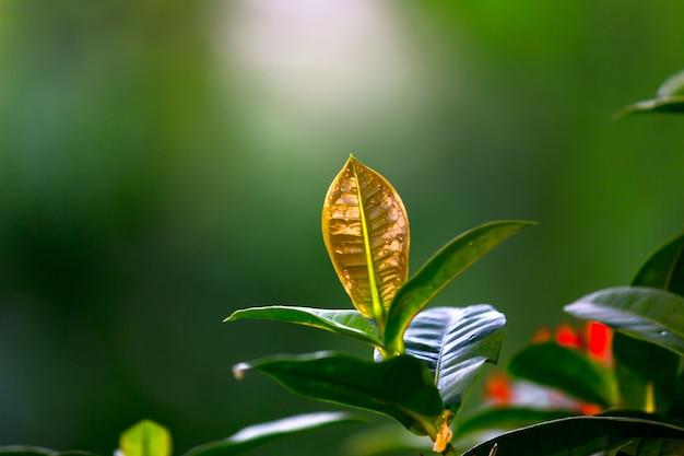 Planten die overdag het natuurlijke zonlicht reflecteren op een donkere achtergrond Premium Foto