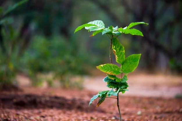 Planten die overdag het natuurlijke zonlicht reflecteren op een donkere achtergrond