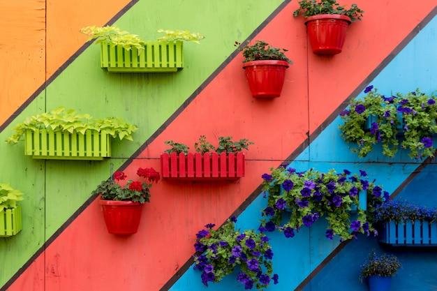 Planten en bloemen in houten en plastic potten op kleurrijke geschilderde achtergrond