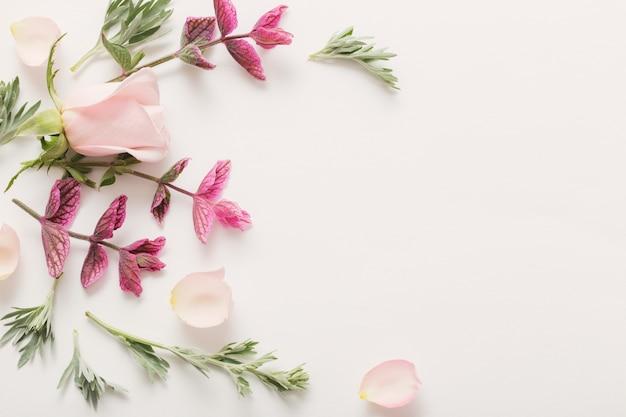 Planten en bloemen op wit