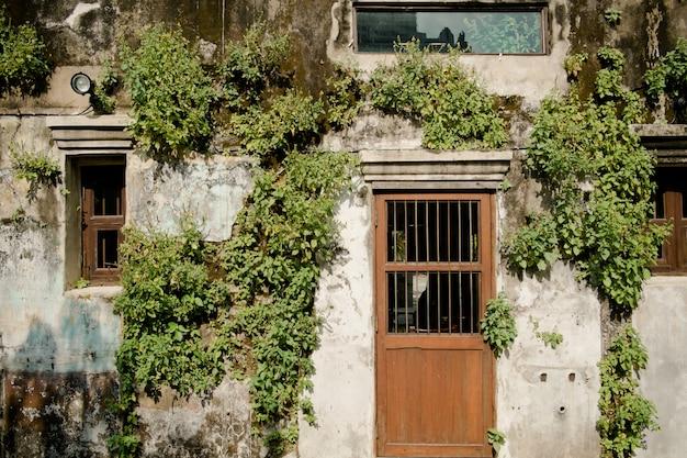 Planten en mos de groei op de oude muur in bangkok, thailand.