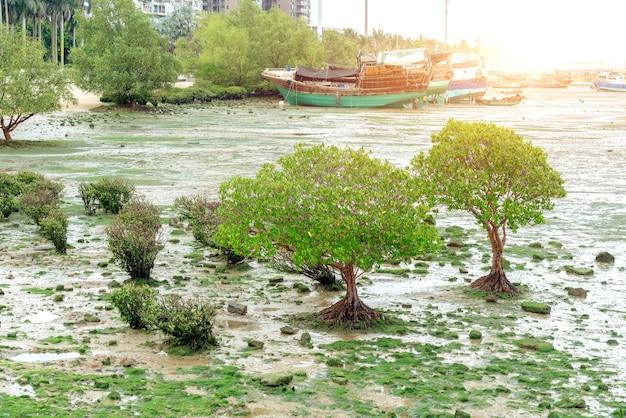 Planten en vissersboot op het strand, zhanjiang, china.