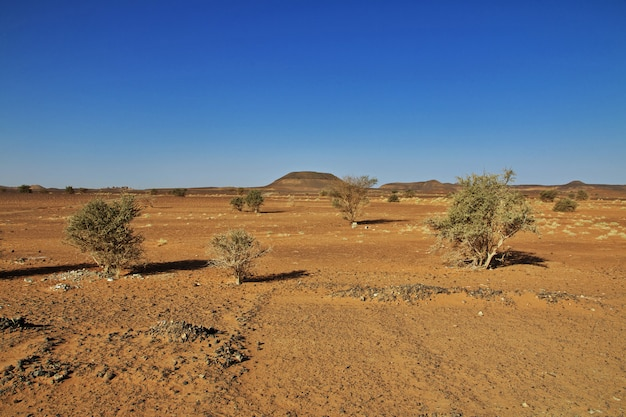Planten in de sahara woestijn van soedan