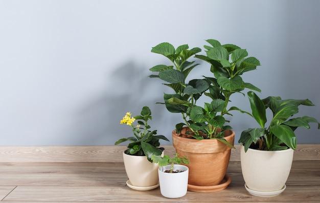 Planten in potten op houten vloer binnen