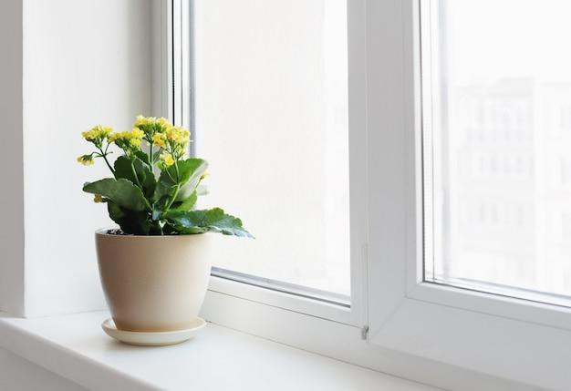 Planten in potten op witte vensterbank binnen