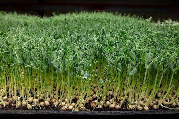 Planten kweken in een kas.