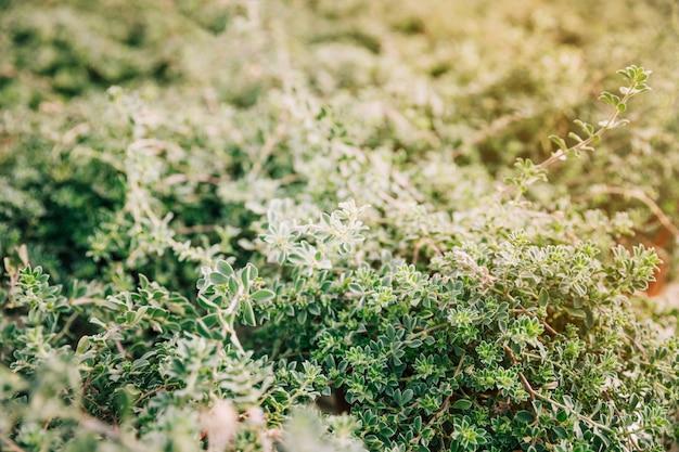 Planten met kleine groene bladeren in de tuin