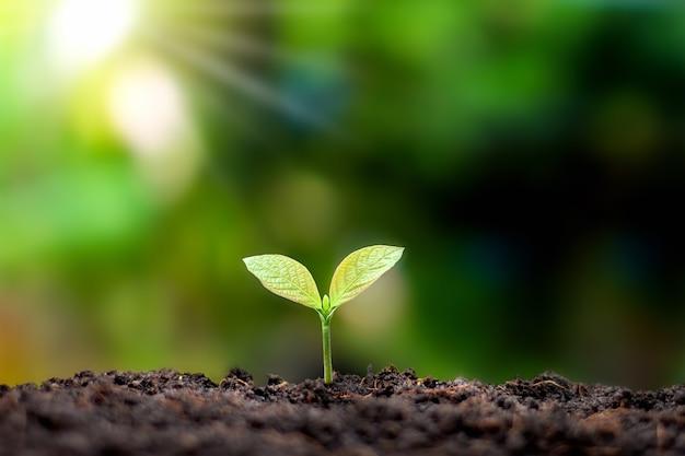 Planten of bomen met groene bladeren die op de grond groeien en de achtergrond van de groene natuur vervaagt met het concept van herbebossing en bosherstel met natuurlijke cyclus.