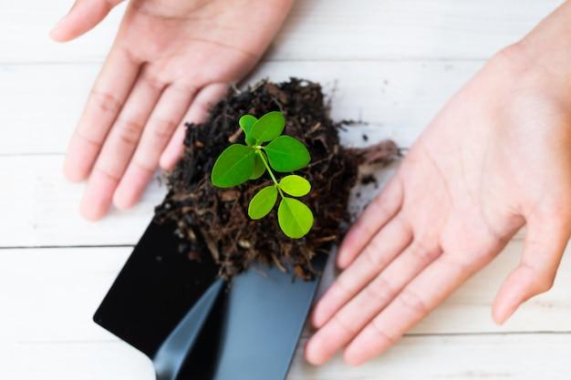 Planten van planten en grond in handen houden. boom groeit en voorkomt door de mens.
