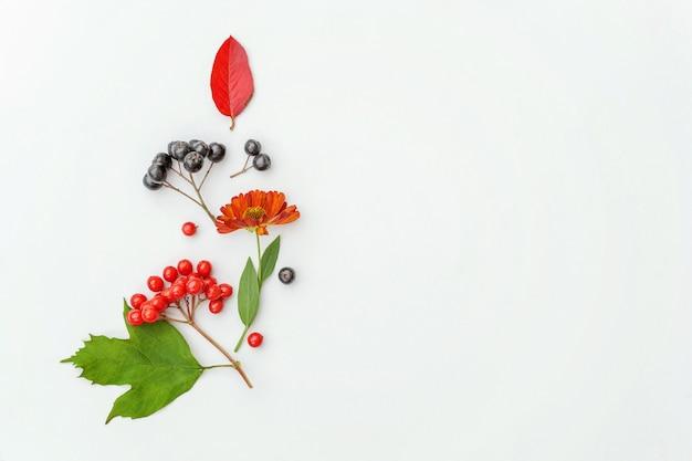Planten viburnum rowan bessen dogrose verse bloemen kleurrijke bladeren geïsoleerd op een witte achtergrond
