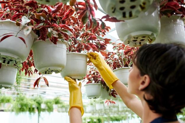Plantenkwekerijmedewerker die bloemen controleert