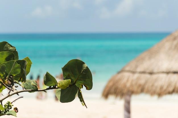 Plantentakje dichtbij strand en azuurblauwe overzees