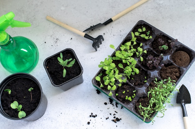 Plantjes in zwarte plastic kweekbak