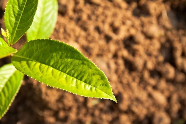Plantkunde gedijen weer voeden ontwikkelen