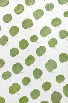 Plantpatroon van groenblijvende natuurlijke bladeren van eucalyptus diagonaal gerangschikt op een lichtgrijze muur. plat leggen.