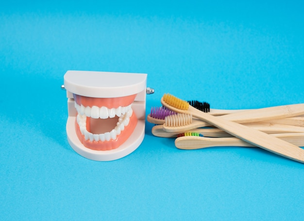 Plastic model van een menselijke kaak met witte tanden en houten tandenborstel op een blauwe achtergrond, mondhygiëne