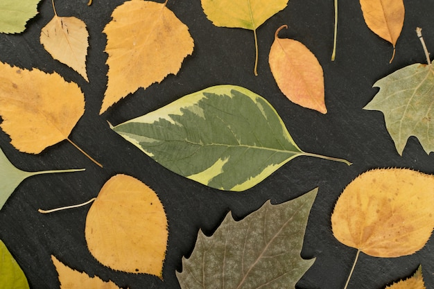 Plat gedroogde bladeren