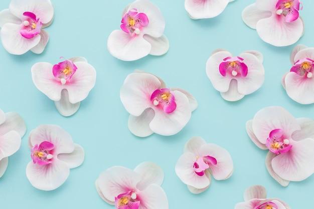 Plat lag arrangement van roze orchideeën