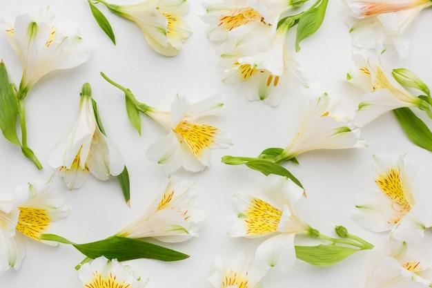 Plat lag arrangement van witte alstroemeria