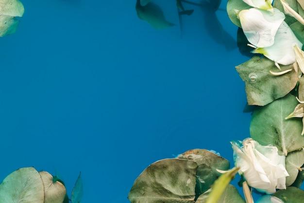 Plat lag bloemblaadjes en bladeren in water met kopie ruimte