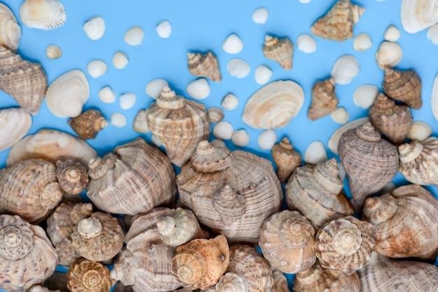 Plat lag, bovenaanzicht van verschillende soorten schelpen op blauwe achtergrond.