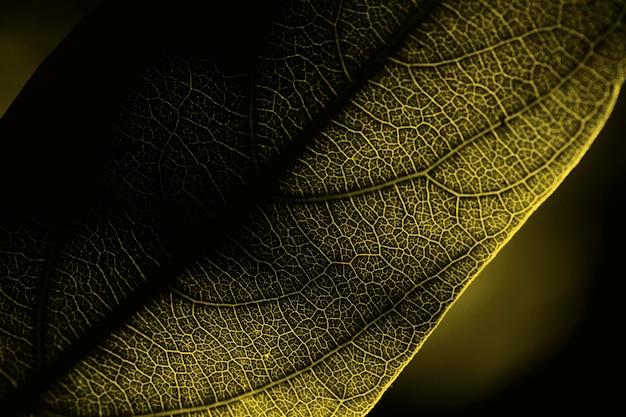 Plat lag close-up van verhelderend blad