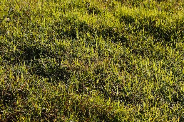 Plat lag groen gras