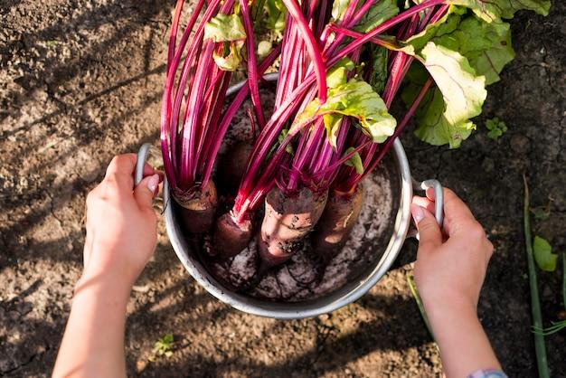 Plat lag groenten in pot