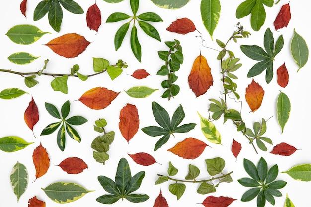 Plat lag groep van bladeren en bloemen