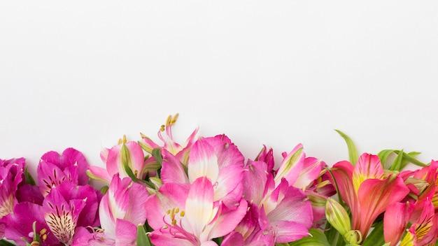 Plat lag kleurrijke alstroemeria's met kopie-ruimte