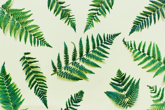 Plat lag met varentakken bosplanten