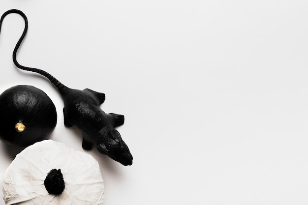 Plat lag pompoenen en rat met kopie-ruimte