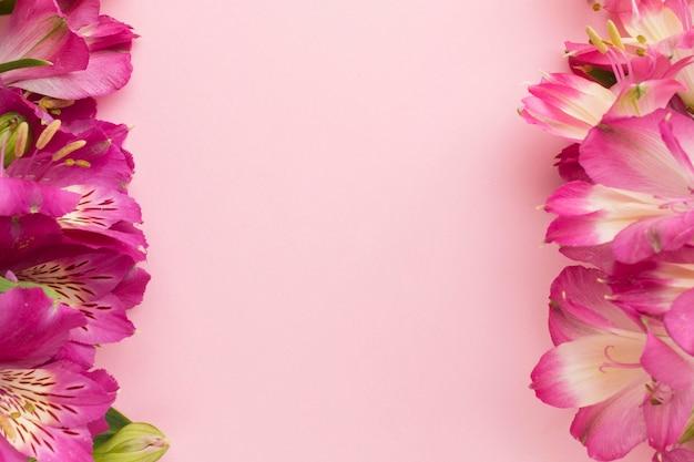 Plat lag roze alstroemeria met kopie-ruimte