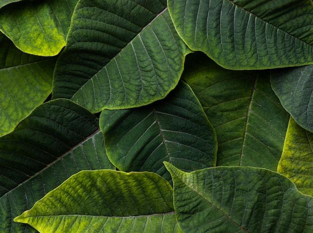 Plat lag samenstelling van groene bladeren