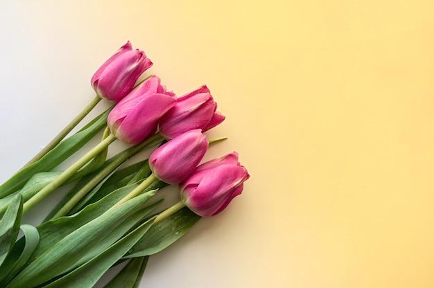 Plat leggen bloemsamenstelling. roze tulpen op een gele achtergrond met kleurovergang. detailopname. kopieer ruimte.