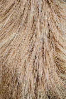 Plat leggen hondenhaar behang