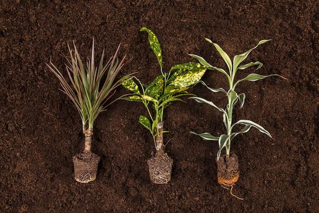 Plat leggen tuinieren compositio