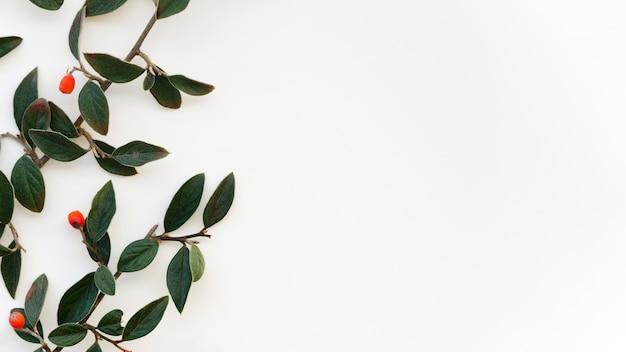 Plat leggen van bladeren concept met kopie ruimte