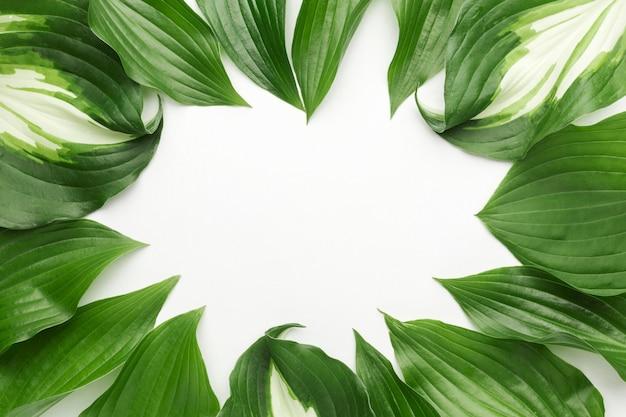 Plat leggen van bladeren frame concept met kopie ruimte