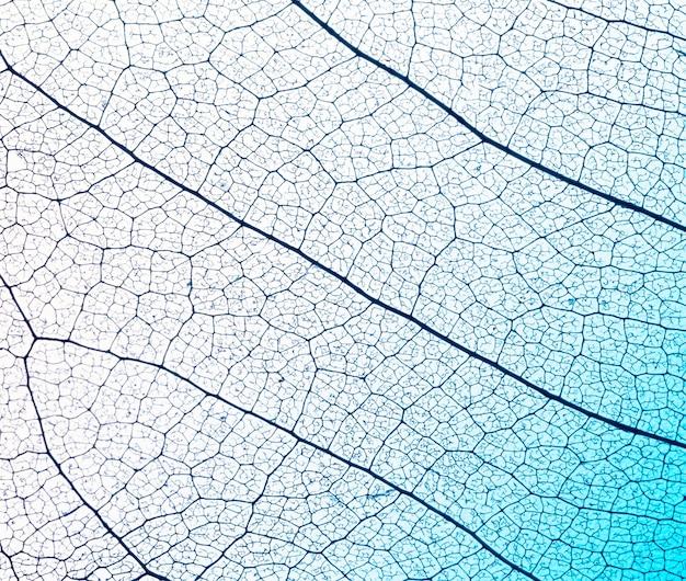 Plat leggen van bladlamina textuur